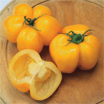 20 Sementes de Tomate Yellow Stuffer